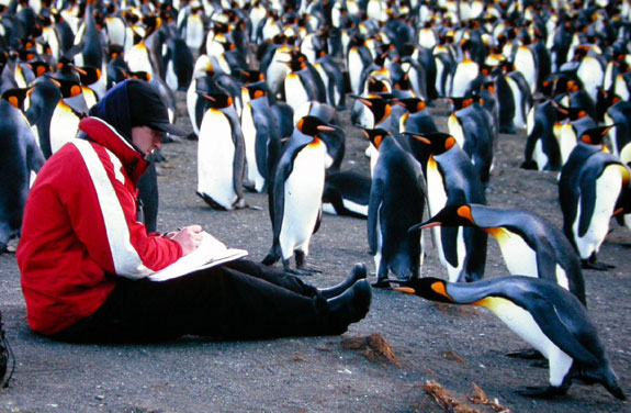 John Gale in a penguin rookery