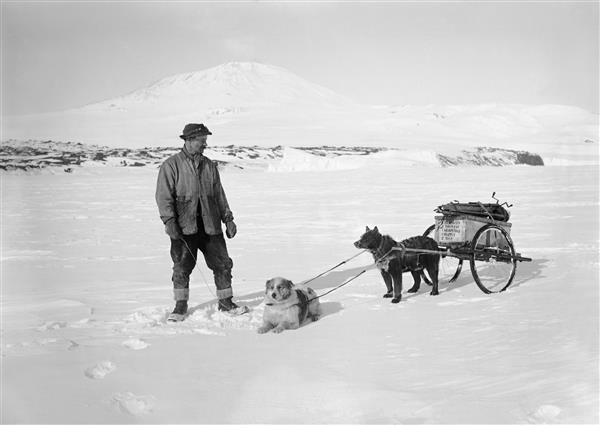 Herbert Ponting with his photographic outfit on a dog cart, with dogs Miss Johnson and Lassie, 24 December, 1911. (Image: SPRI P2005/5/729)